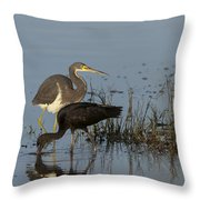 Tri-colored Heron And Glossy Ibis Throw Pillow