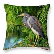Tri-colored Heron At Sunset  Throw Pillow