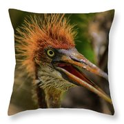 Tri Colored Heron Chick Throw Pillow