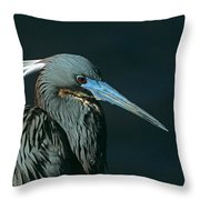 Tri Colored Heron Displaying Breeding Plumage Throw Pillow