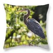 Tri-colored Heron Fledgling  Throw Pillow