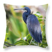 Tri-colored Heron On A Branch  Throw Pillow