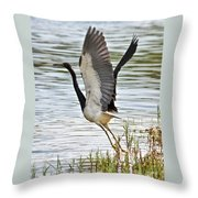Tri Colored Heron Takeoff Throw Pillow