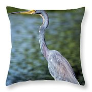 Tri, Tri, Tricolor As You Might Throw Pillow