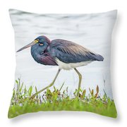 Tricolor Heron Throw Pillow