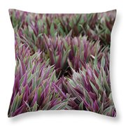 Tricolor Moses In The Cradle Plant Throw Pillow