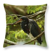 Tricolored At Rest  Throw Pillow