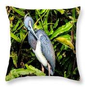 Tricolored Heron 3 Throw Pillow