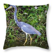 Tricolored Heron Hunting Throw Pillow
