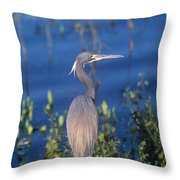 Tricolored Heron In Monet Like Setting Throw Pillow