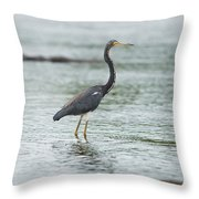 Tricolored..  Throw Pillow