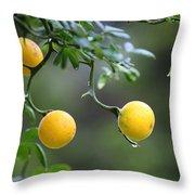 Trifoliate Orange Throw Pillow