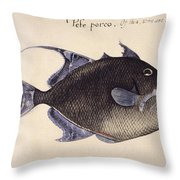 Trigger-fish, 1585 Throw Pillow