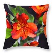 Trio Of Alstroemeria Inca Flowers-4 Throw Pillow