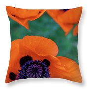 Trio Of Poppies Throw Pillow