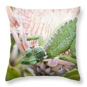 Trioceros Jacksonii - Jackson's Chameleon - Maui Hawaii Throw Pillow