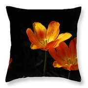 Triples Throw Pillow by Lois Bryan