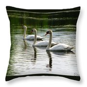 Triplet Swans Throw Pillow