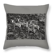 Trophy Rams Throw Pillow