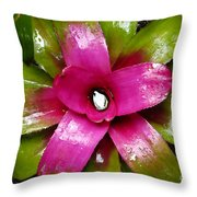 Tropic Wonder Throw Pillow