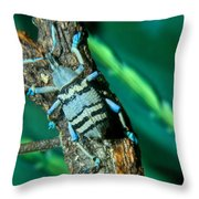 Tropical Blue Weevil Throw Pillow