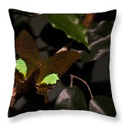 Tropical Buterfly Throw Pillow