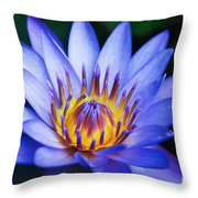 Tropical Dreams Throw Pillow by Sharon Mau