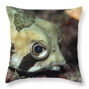 Tropical Fish Porcupinefish  Throw Pillow