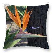 Tropical Garden Photo Of A Bird Of Paradise  Throw Pillow