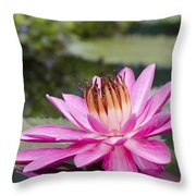 Tropical Night Flowering Water Lily Rose De Noche II Throw Pillow