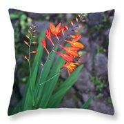 Tropical Orange Lily Throw Pillow