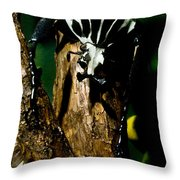 Tropical Scarab Throw Pillow