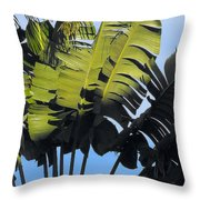 Tropical Sunlight And Shadow Throw Pillow