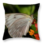 Tropical White Butterfly Throw Pillow by April Wietrecki Green