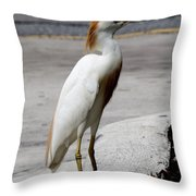 Trump Egret Throw Pillow