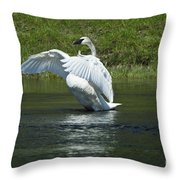 Trumpeter Swan On The Madison River Throw Pillow