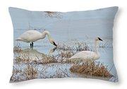 Trumpter Swans 8182 Throw Pillow