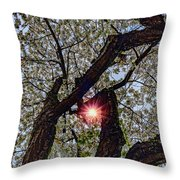 Trunk Of A Cherry Tree Blooming With White Flowers Throw Pillow