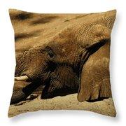 Trunk Show Throw Pillow
