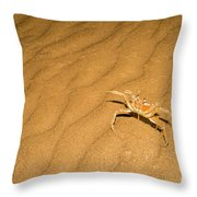 tufted ghost crab Ocypode cursor on sand Throw Pillow