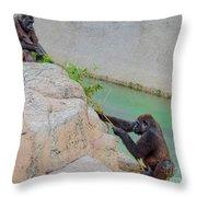 Tug-o-war Western Gorillas Throw Pillow