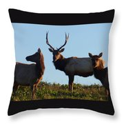 Tule Elk Bull And Harem Throw Pillow
