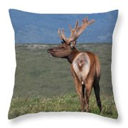 Tule Elk Bull Bugling Throw Pillow