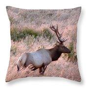 Tule Elk Bull In Grassland Meadow Throw Pillow