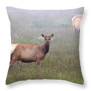 Tule Elk In Fog Throw Pillow