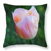 Tulip Apricot Beauty Throw Pillow