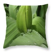 Tulip Bud 2 Throw Pillow