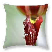 Tulip In Blossom 1 Throw Pillow