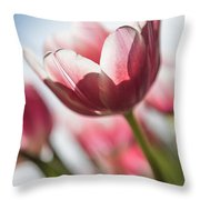 Pink Tulip Closeup Throw Pillow