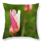 Tulip Time Throw Pillow